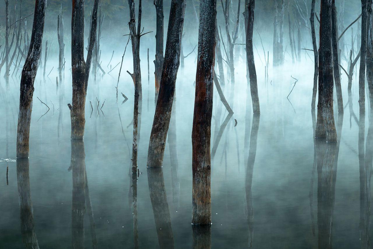 Холодно и туманно, © Георге Попа / Gheorghe Popa, Почётный отзыв в категории «Пейзажи», Фотоконкурс Nature Photographer of the Year Contest