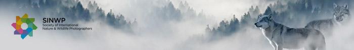 Фотоконкурс «Мир природы» — Natural World