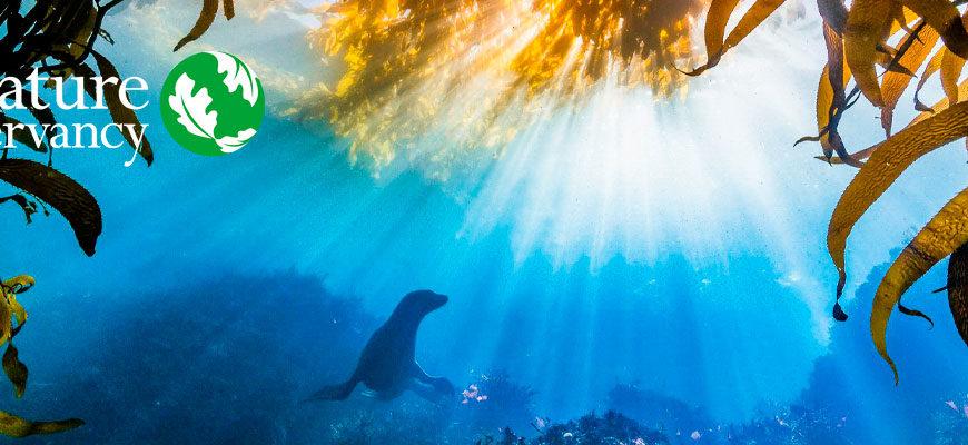 Фотоконкурс «Охрана природы 2021» от Nature Conservancy