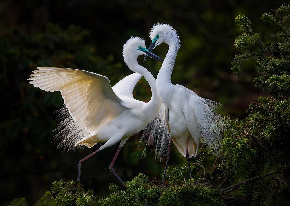 Желающие любви, Наньчан, Китай, © Сюй Ён, Шанхай, Китай, Гран-при конкурса, Фотоконкурс «Лучшая природная фотография Азии»