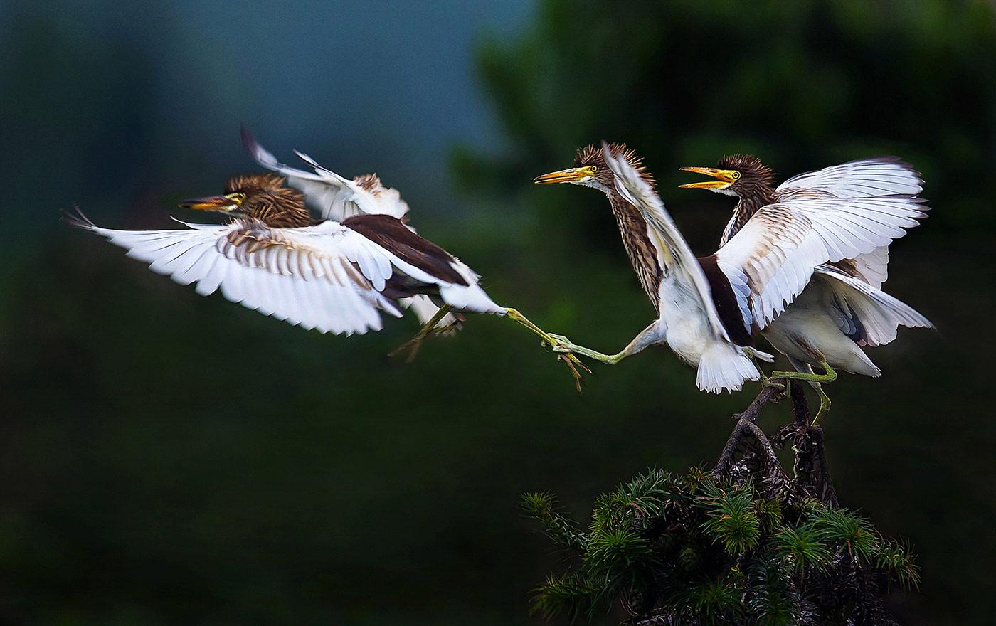 Не улетай. Фучжоу, Цзянси, Китай, © Цзяньхуэй Ляо, Наньчан, Китай, Высокая оценка в категории «Птицы», Фотоконкурс «Лучшая природная фотография Азии»