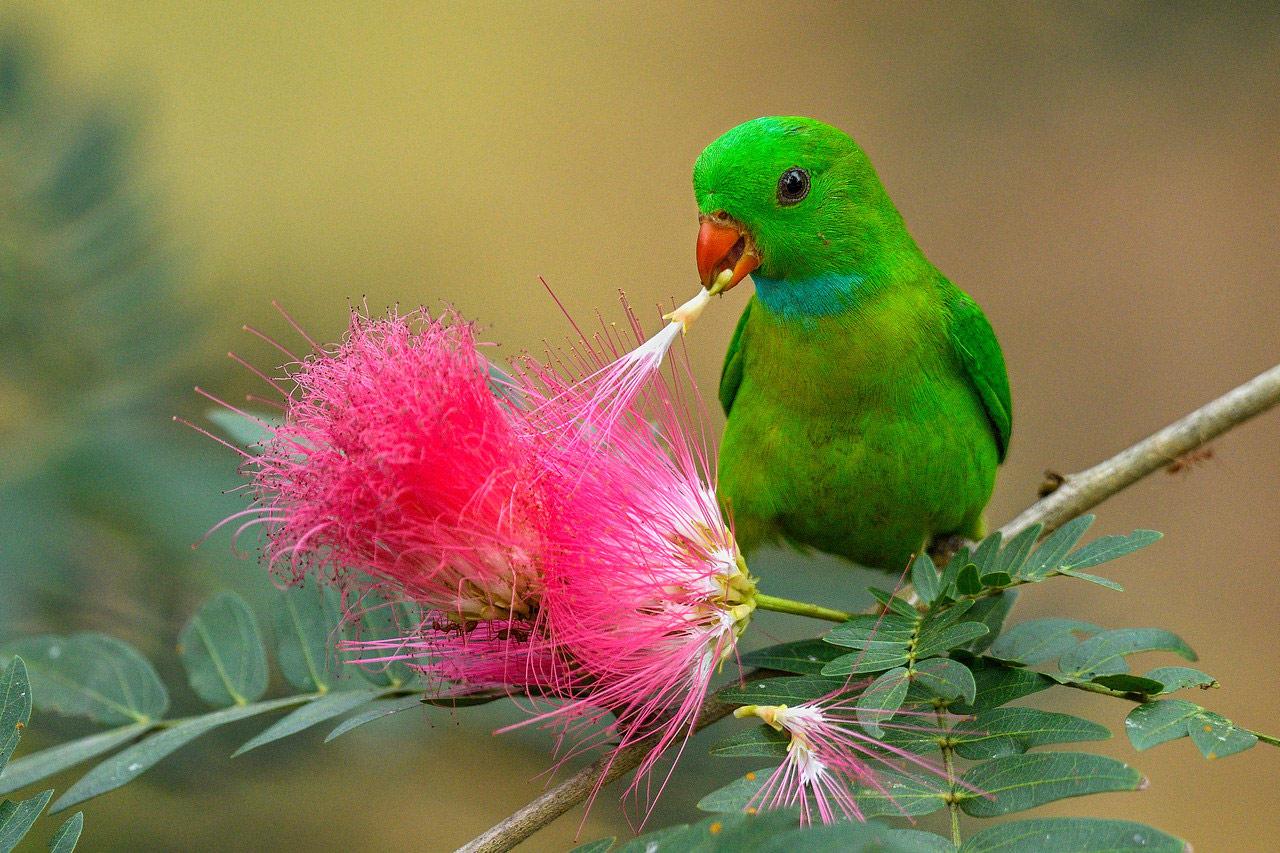 С сочным цветком. Гоа, Индия, © Сантош Кришнамурти, Бангалор, Индия, Высокая оценка в категории «Птицы», Фотоконкурс «Лучшая природная фотография Азии»