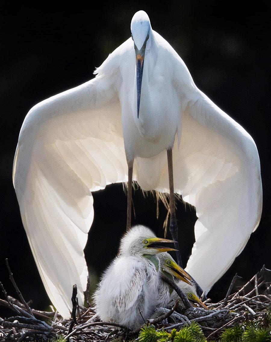 Поддержка. Наньчан, Цзянси, Китай, © Гуйян Цзэн, Наньчан, Цзянси, Китай, Высокая оценка в категории «Птицы», Фотоконкурс «Лучшая природная фотография Азии»
