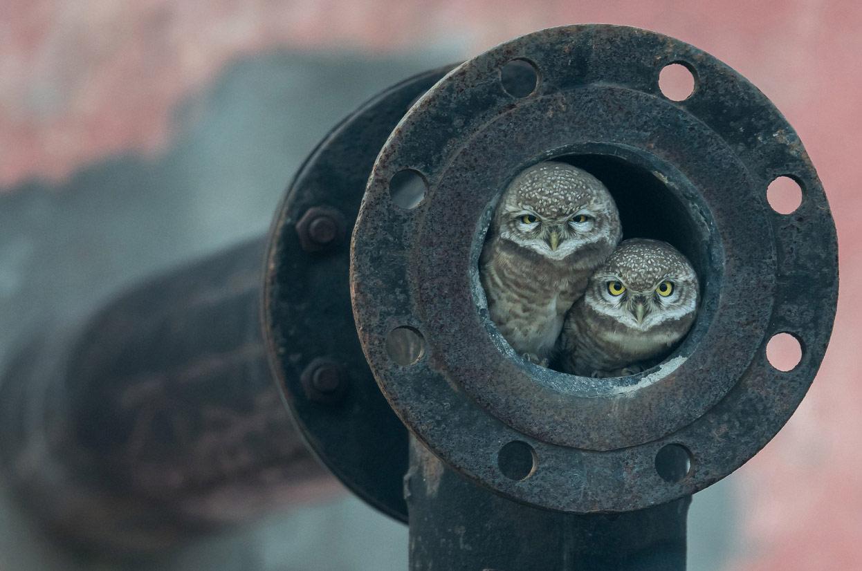 Я вижу тебя. Капуртхала, Пенджаб, Индия, © Аршдип Сингх, Джаландхар, Индия, Победитель категории «Юный фотограф», Фотоконкурс «Лучшая природная фотография Азии»