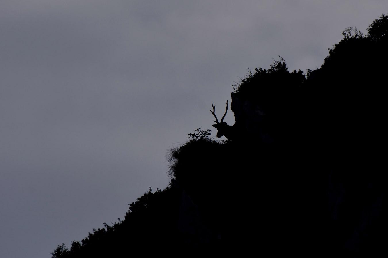 Одинокий олень. Ибукияма, Япония, © Кайто Такахаши, Гунма, Япония, Высокая оценка в категории «Юный фотограф», Фотоконкурс «Лучшая природная фотография Азии»