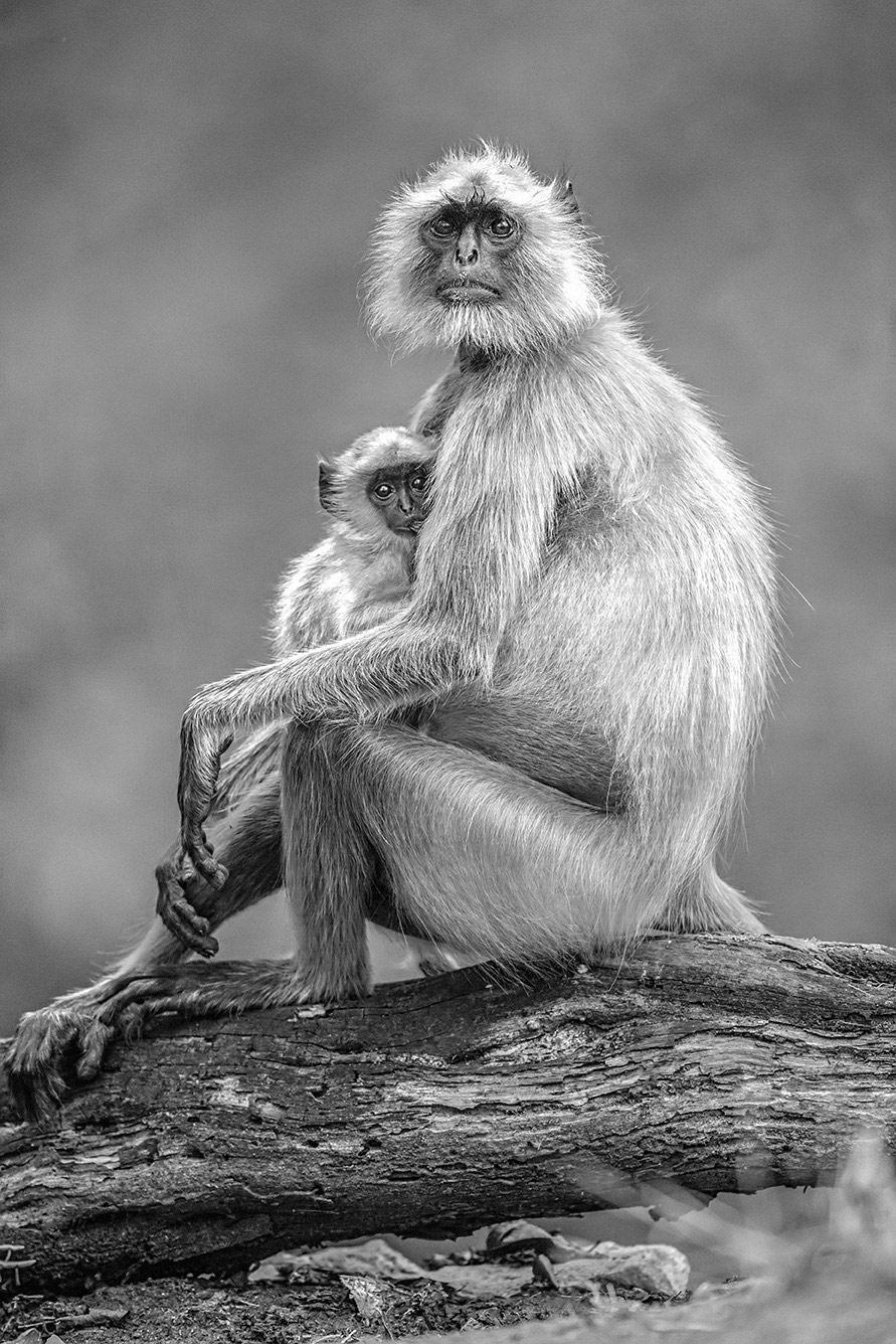 Материнский круг. Национальный парк Пенч, Индия, © Адвайт Афале, Колхапур, Индия, Высокая оценка категории «Дикая природа», Фотоконкурс «Лучшая природная фотография Азии»