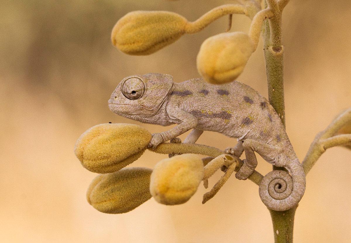 Слияние, Хашарон. Израиль, © Ребекка Левисман, Раанана, Израиль, Высокая оценка в категории «Дикая природа», Фотоконкурс «Лучшая природная фотография Азии»
