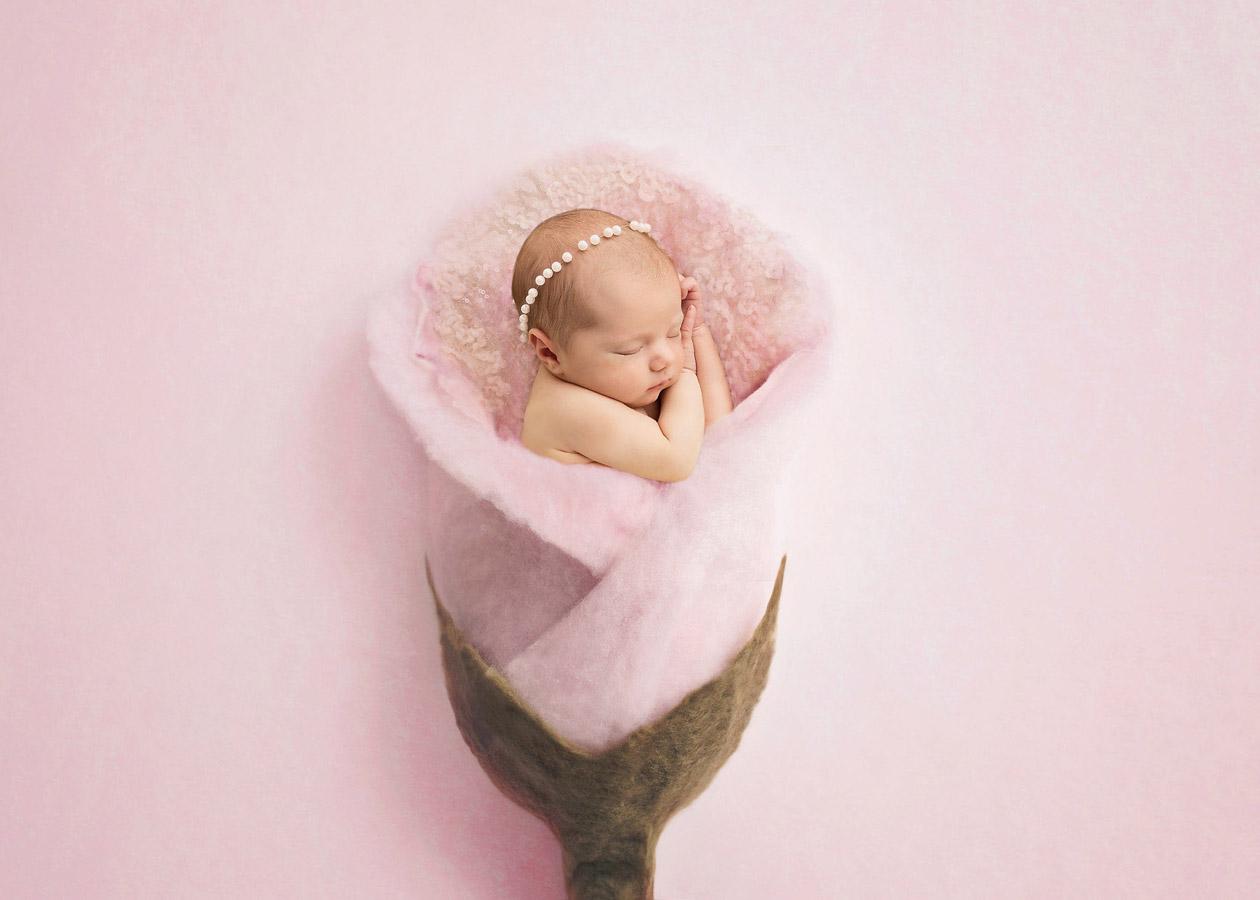 Тюльпан из росы, © Доминика Скржипек, Фотоконкурс новорожденных