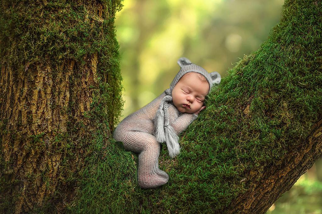 Медведь на дереве, © Линдсей Уолден, США, Фотоконкурс новорожденных