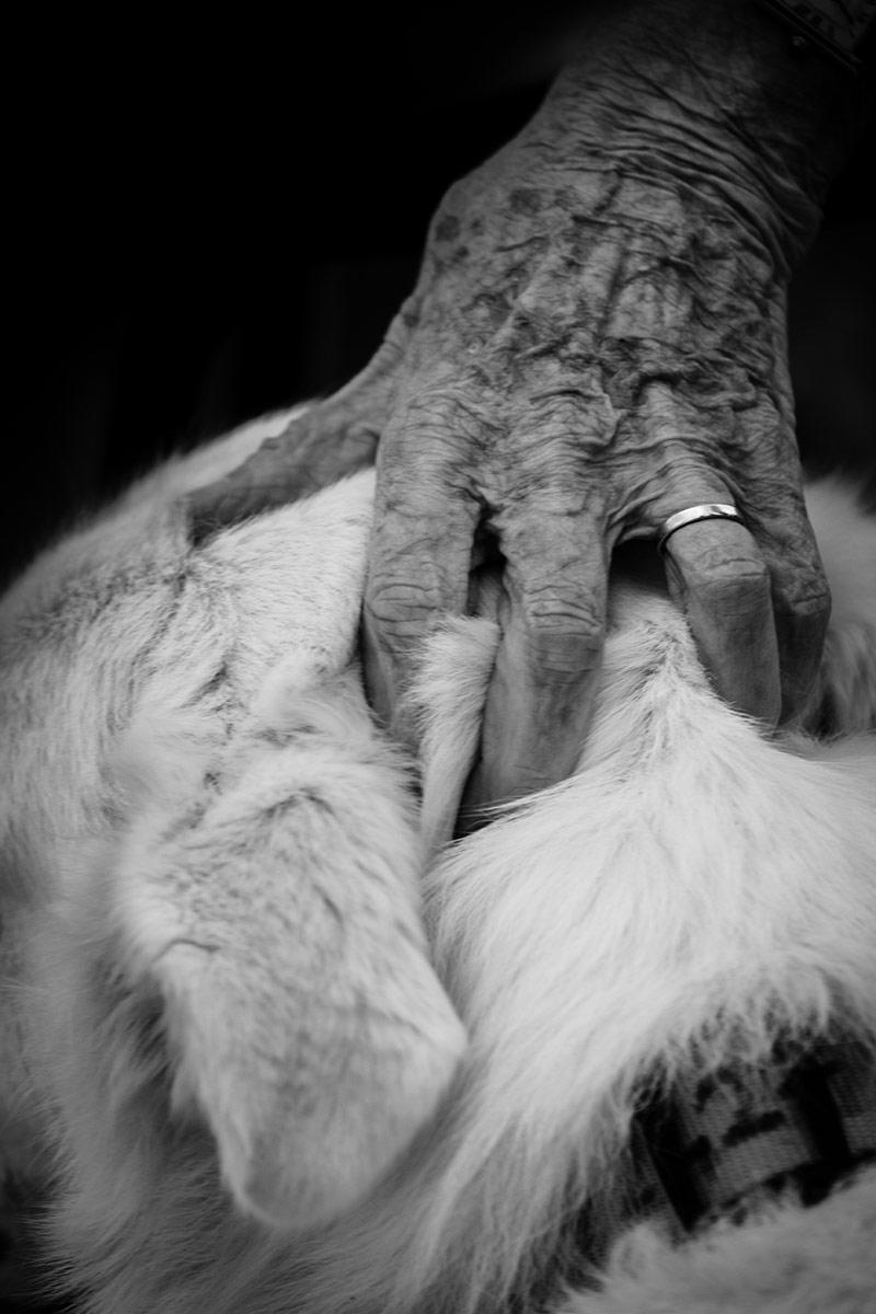 Вечная верность, © Лука Савери, 3-я премия, Фотоконкурс Nikon