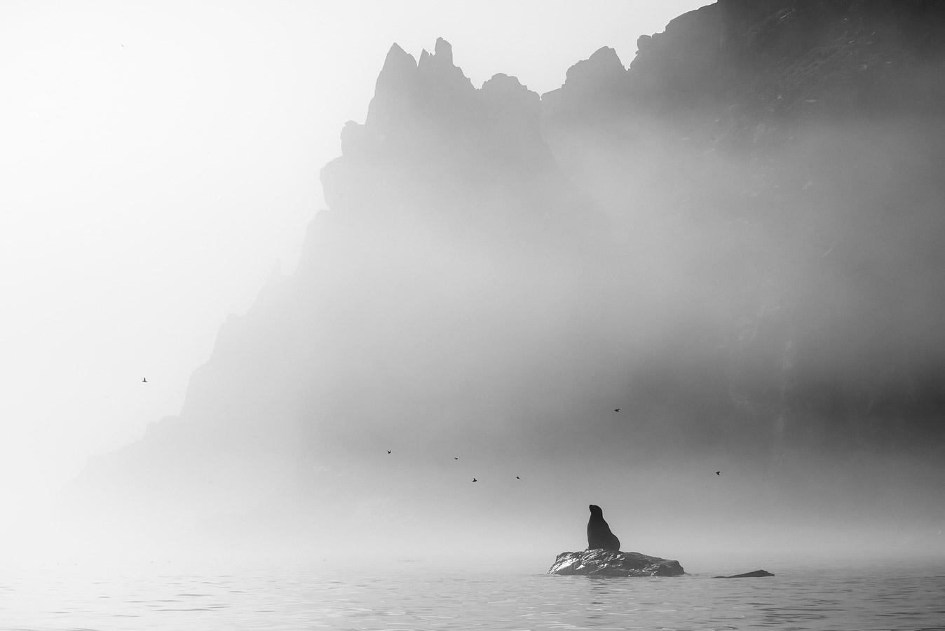 Мечтатель, © Екатерина Васягина, Анималистика, 1 место - Профессионал, Фотоконкурс Nikon «Я в сердце изображения»