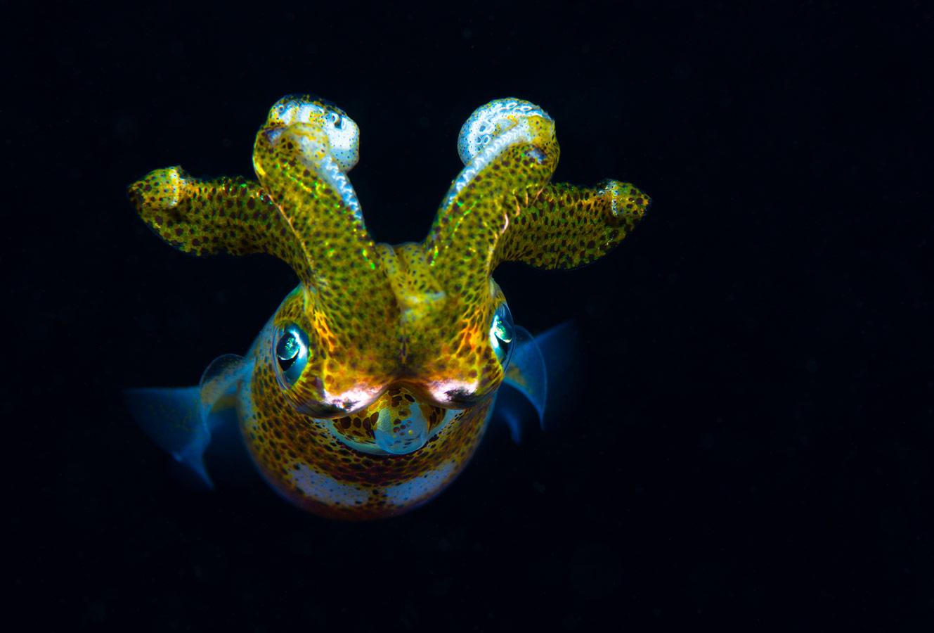 Ночной охотник, © Юрий Иванов, Анималистика, 2 место - Профессионал, Фотоконкурс Nikon «Я в сердце изображения»