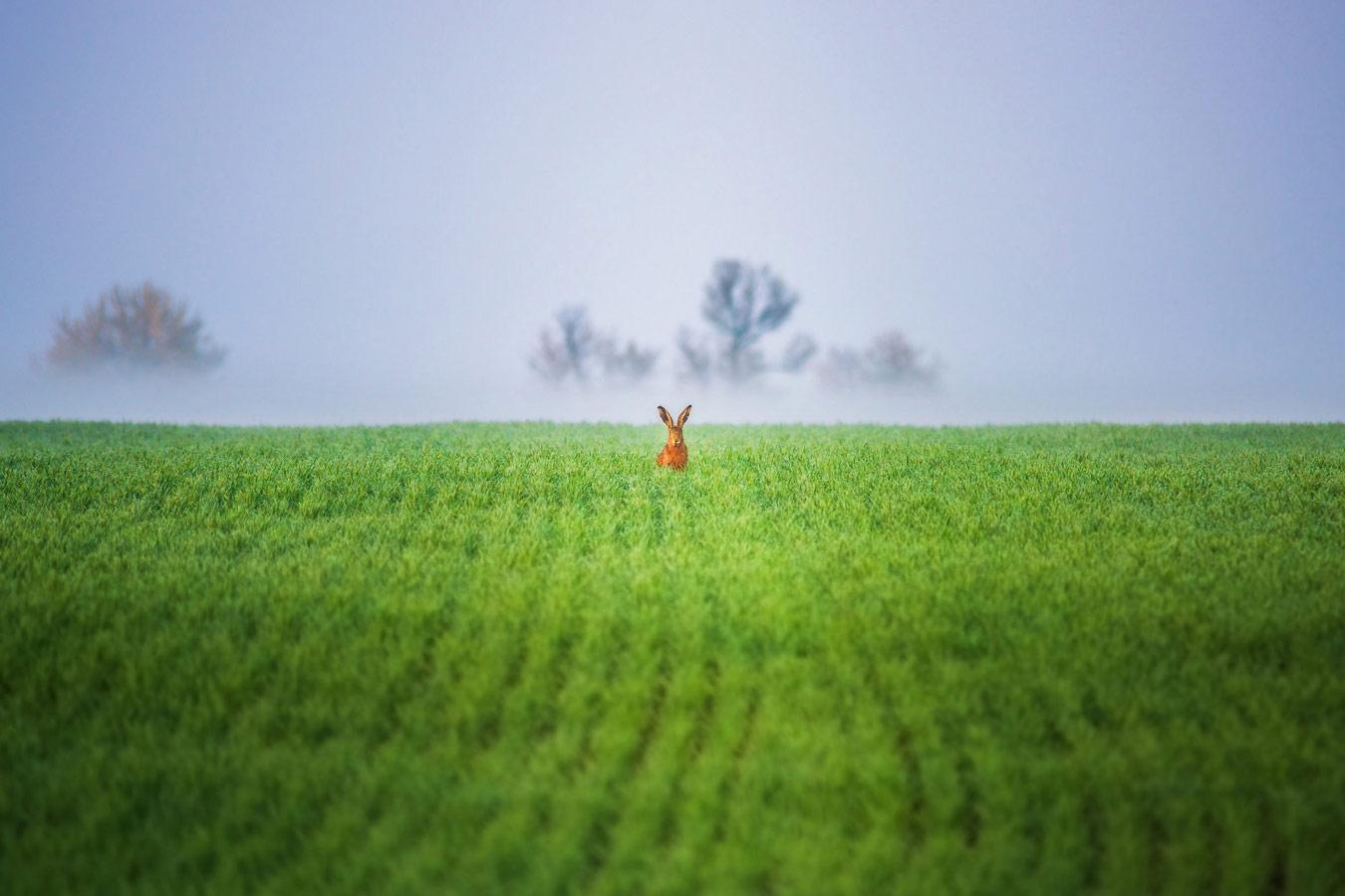 Ну, погоди!, © Василий Яковлев, Животный мир, 1 место - Любители, Фотоконкурс Nikon «Я в сердце изображения»