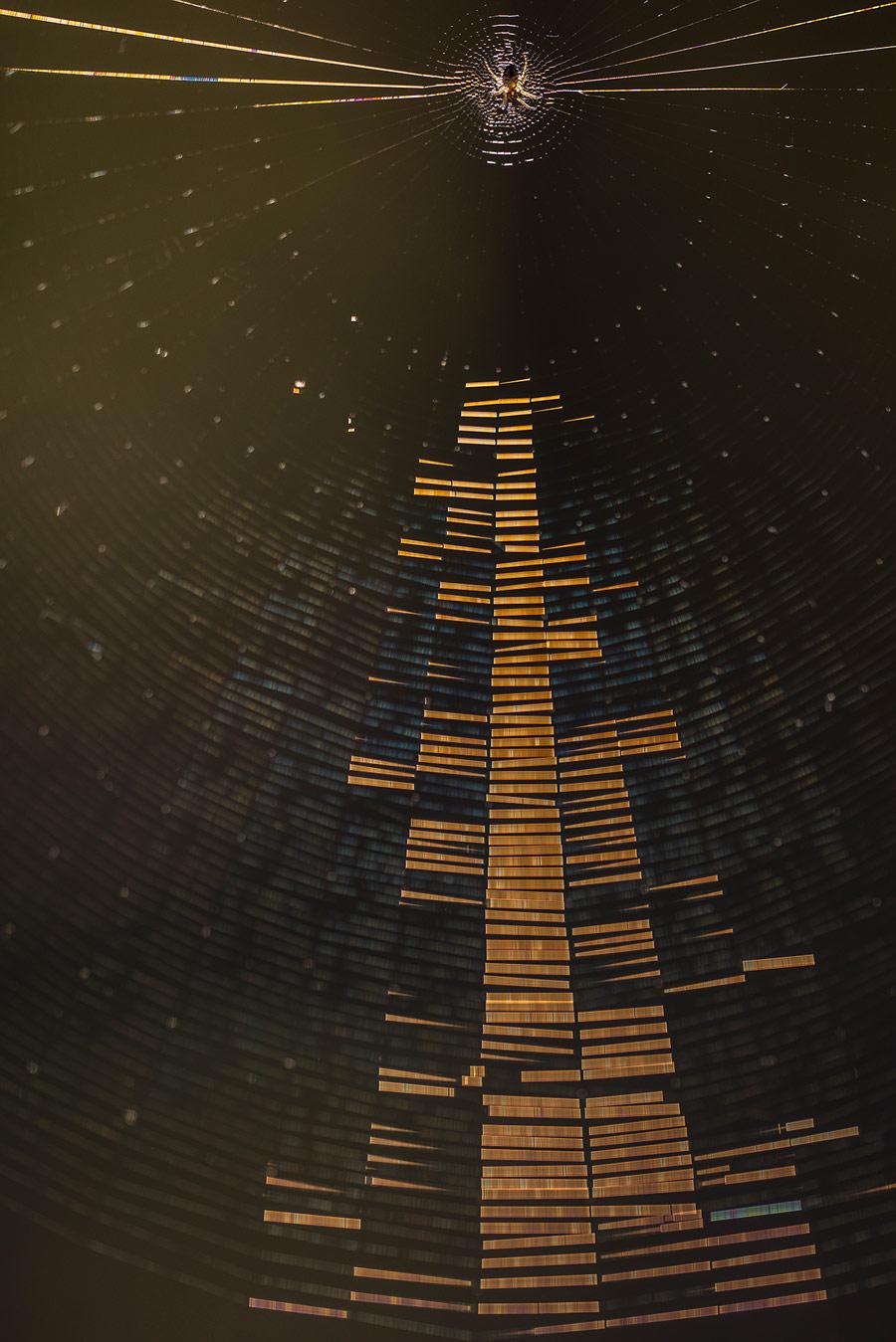 Радиогалактика, © Геннадий Мещеряков, Животный мир, 2 место - Любители, Фотоконкурс Nikon «Я в сердце изображения»