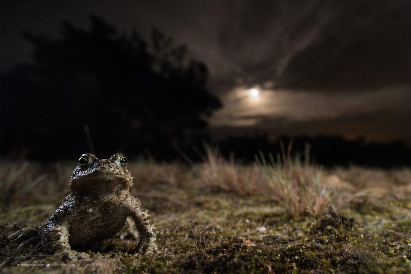 Под луной, © Пауль ван Хооф, Победитель категории «Другие животные», Фотоконкурс «Природный фотограф года»