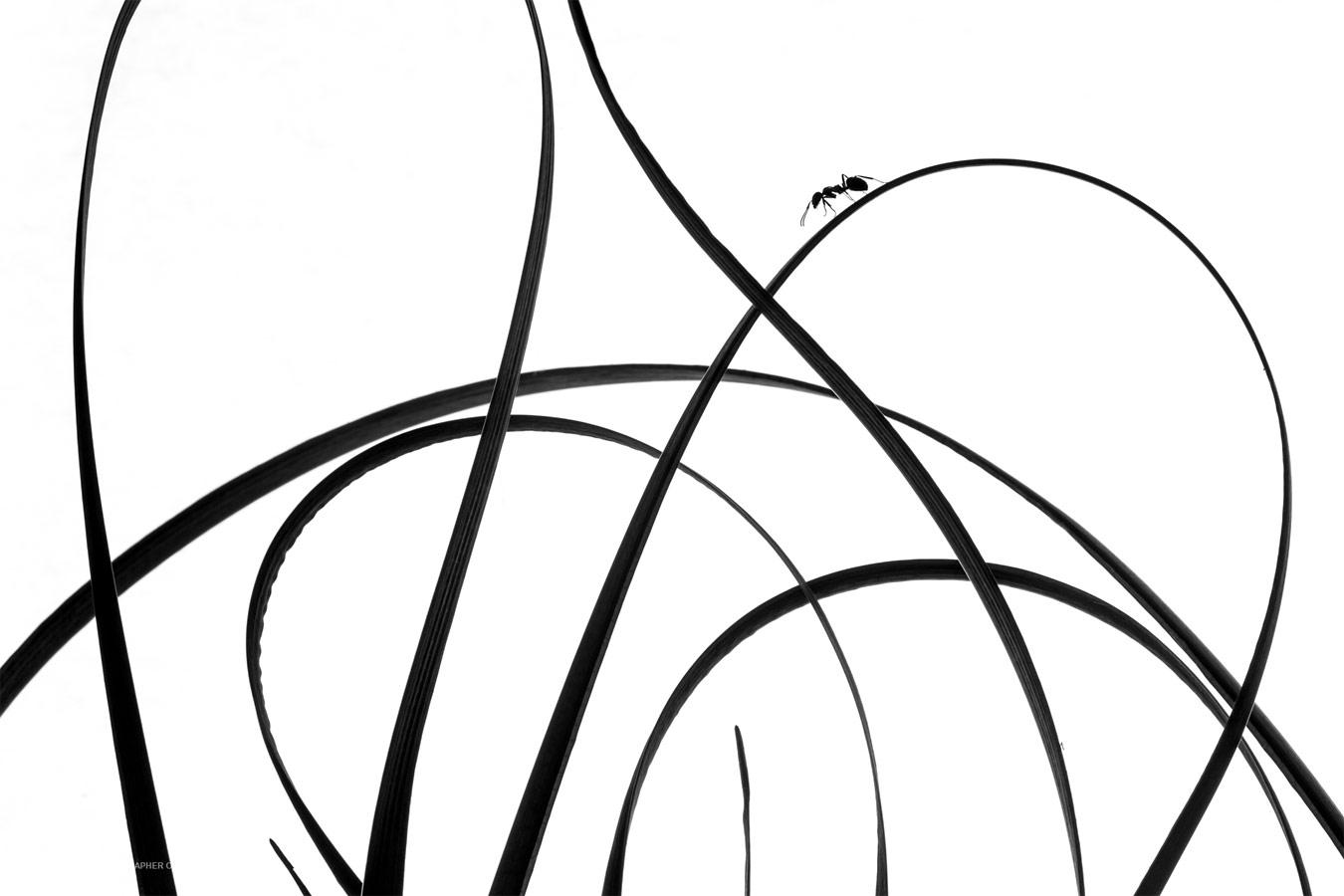 Кривые линии, © Риу Бастейн, Победитель категории «Искусство природы», Фотоконкурс «Природный фотограф года»