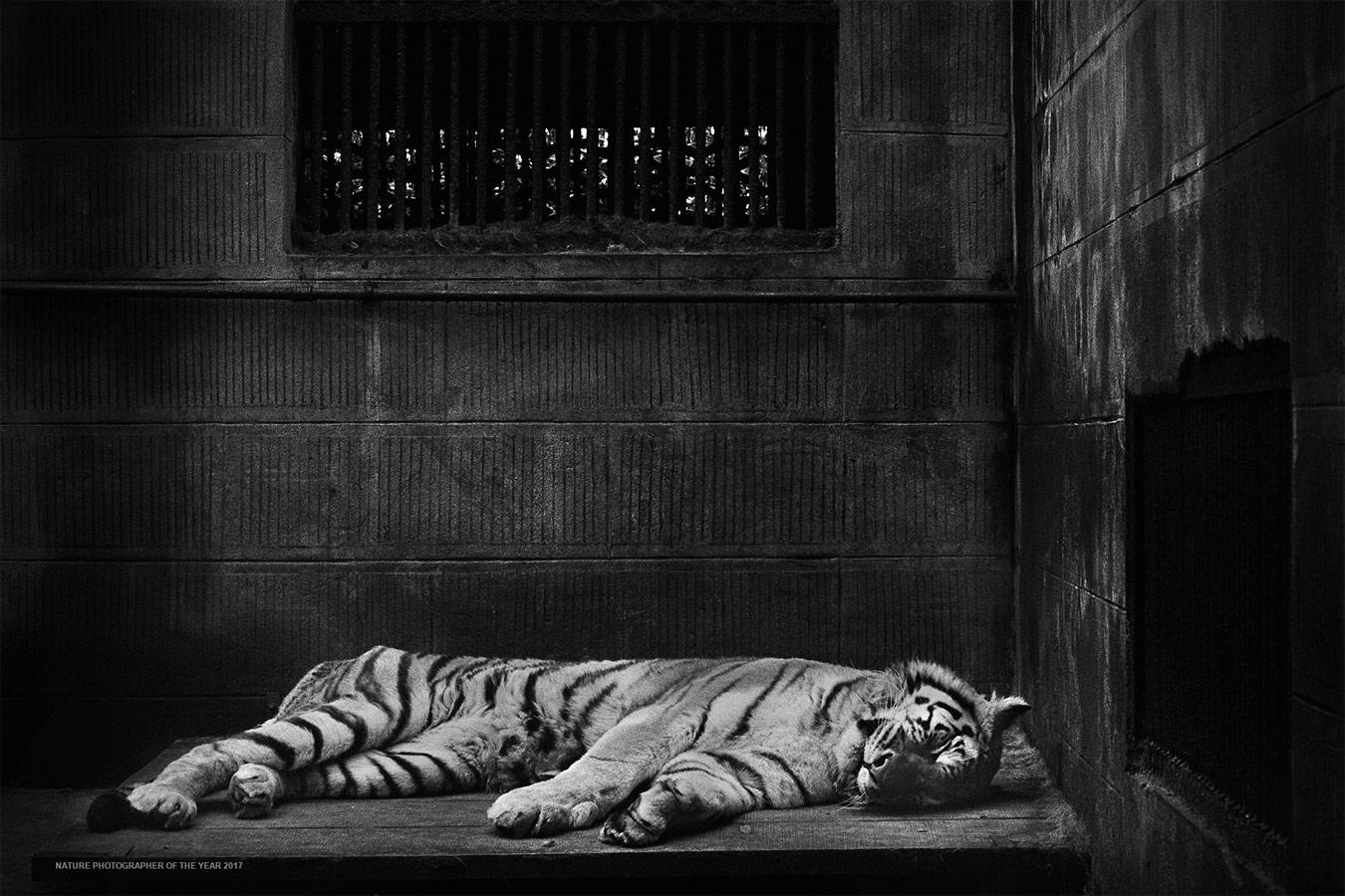Во имя традиционной китайской медицины, © Бритта Ящински, Победитель категории «Человек и природа», Фотоконкурс «Природный фотограф года»