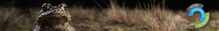 Фотоконкурс «Природный фотограф года»