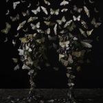 «Свидетельство», © Тара Селлиос / Tara Sellios, Южный Бостон, Финалист категории «Изобразительное искусство / Персональная», Фотоконкурс натюрморта «Объекты желания» — Objects of Desire
