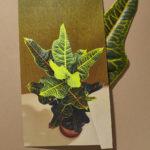 «Все материально», © Студия Likeness, Берлин, Германия, Первое место в категории «Изобразительное искусство / Персональная», Фотоконкурс натюрморта «Объекты желания» — Objects of Desire