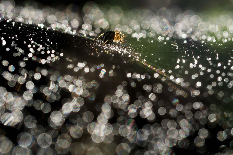 Прогулка по свету, © fabio1962, 3 место в категории «Свет», Фотоконкурс Olympus Global Open