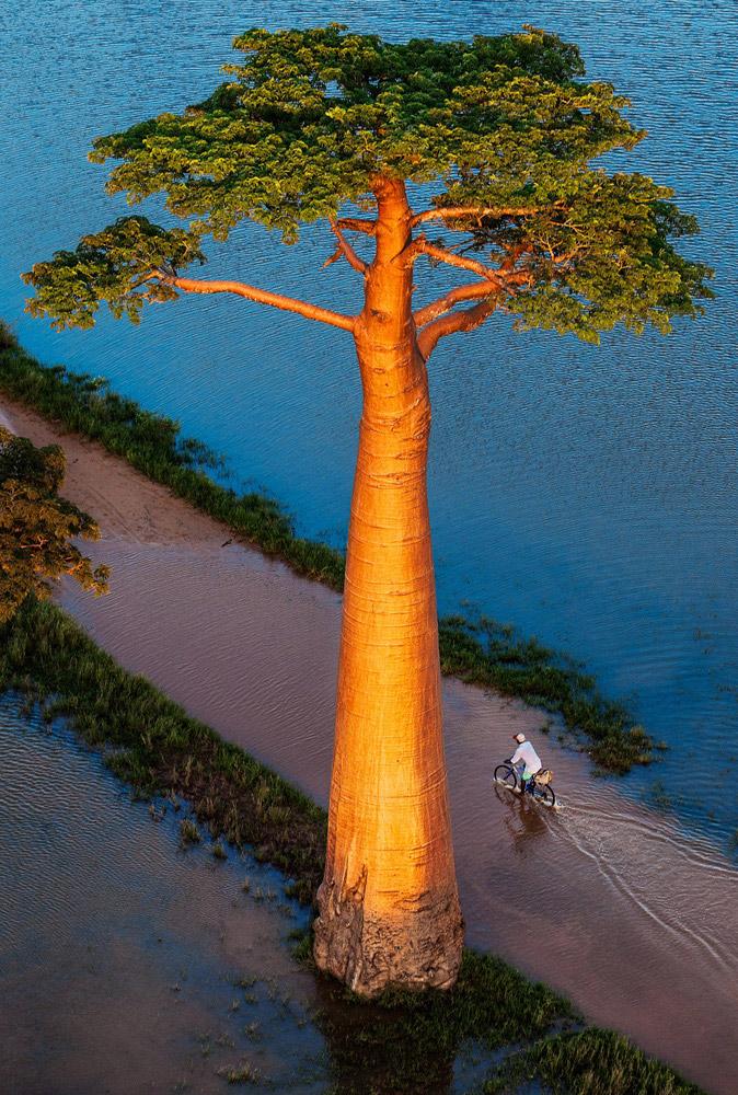 © Паскаль Мейтр, Фотограф года — Книга — Золото, Фотоконкурс One Eyeland Photography Awards