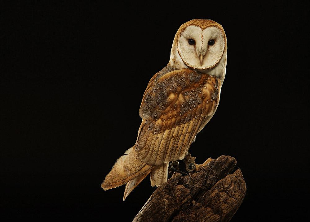 © Крис Гордайнер, Фотограф года — Природа — Серебро, Фотоконкурс One Eyeland Photography Awards