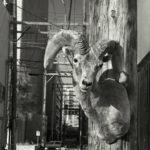 «Становление животного: свидетельство разумного безумия», © Шарон К. Шафер / Sharon K. Schafer, Хендерсон, США, Финалист категории «Идеи», Фотоконкурс «Одна жизнь» — One Life Awards