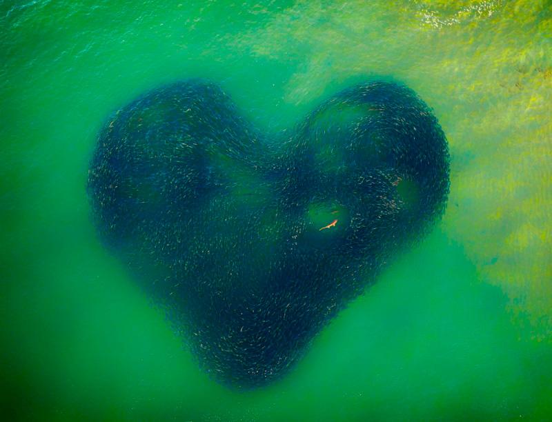 Джим Пико, Любовь Сердце природы