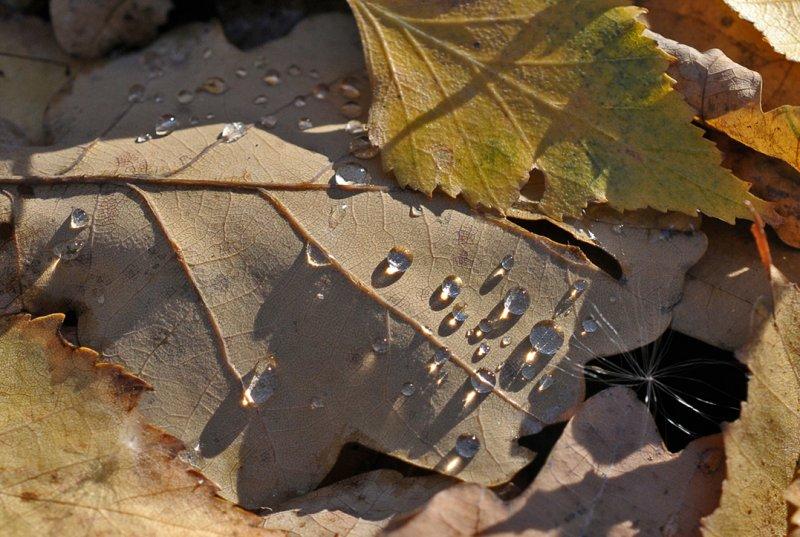 Капли, © Сергей Никольский, Москва, Фотоконкурс «Осень в городе»