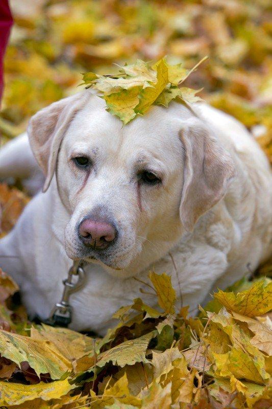 Осенняя собака, © Сергей Ключарев, Москва, Фотоконкурс «Осень в городе»