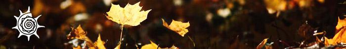 Фотоконкурс «Осень в городе»
