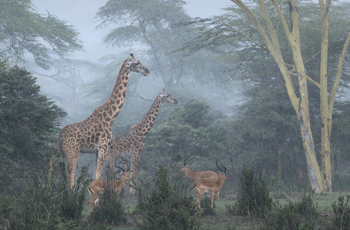 Национальный парк Найроби, Кения, © Хосе Фрагозо / Jose Fragozo, Португалия, Победитель категории «Живая природа», Фотоконкурс Outdoor Photographer of the Year