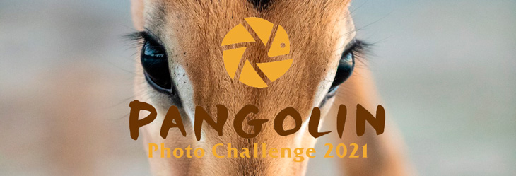 Конкурс фотографий Pangolin Photo Challenge