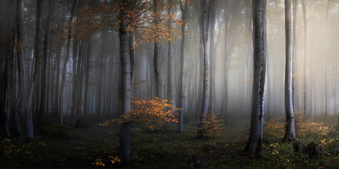 Золотой сезон, Балканские горы, Болгария, © Веселин Атанасов, Фотограф года, Конкурс панорамной фотографии EPSON Pano Awards