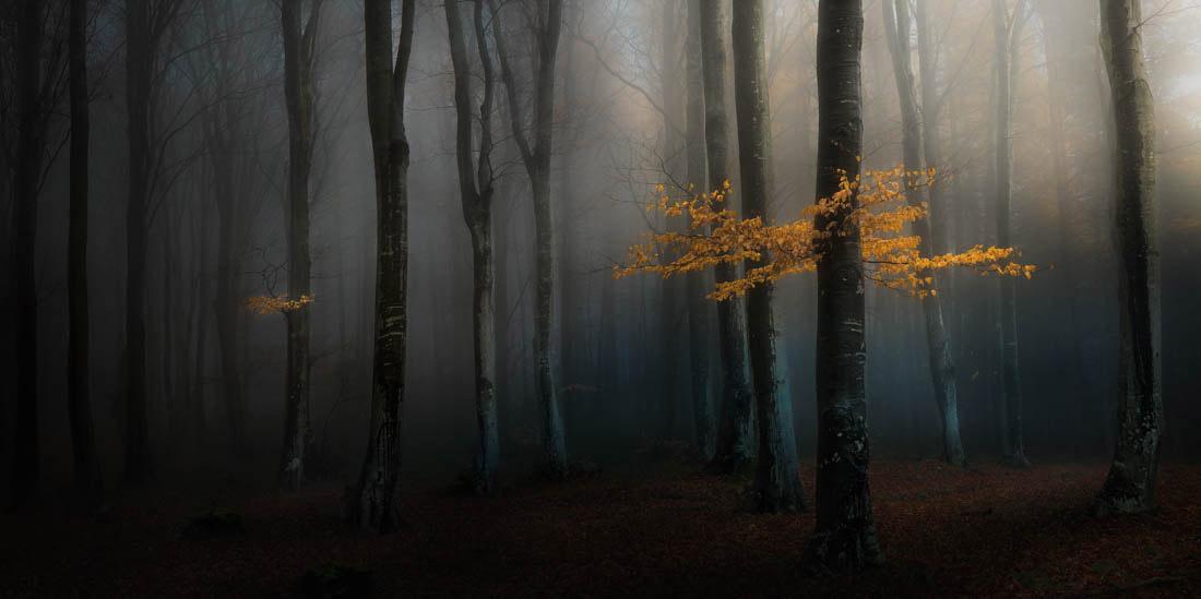 Мистический лес, Национальный парк, Центральный Балкан, Болгария, © Веселин Атанасов, Фотограф года, Конкурс панорамной фотографии EPSON Pano Awards