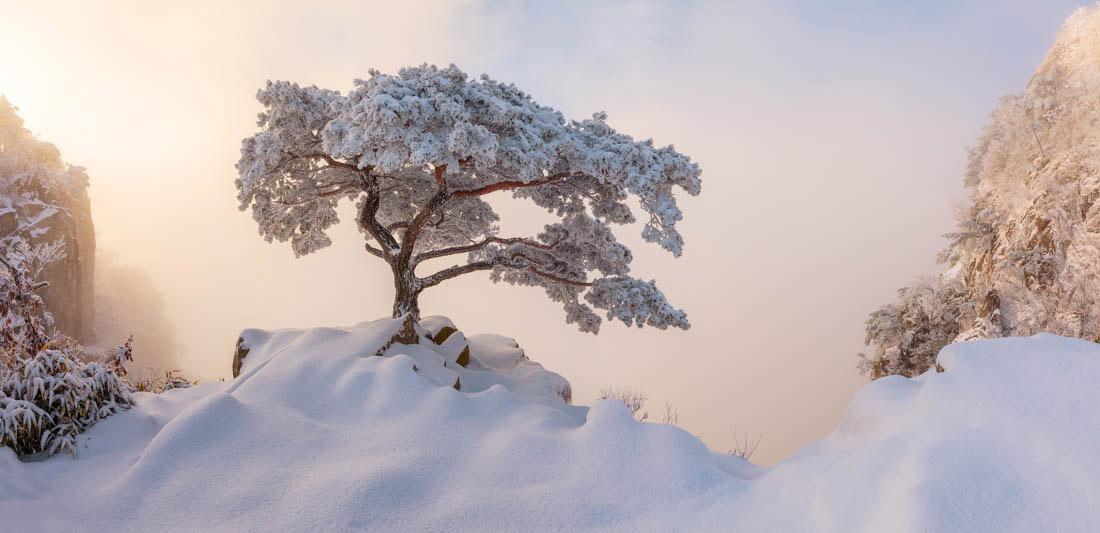 Королевский наряд, Дедунсан, Южная Корея, © Натаниэль Мерц, Корея, Победитель любительской премии - Природа / Пейзаж, Победитель среди любителей 2018 года, Конкурс панорамной фотографии EPSON Pano Awards