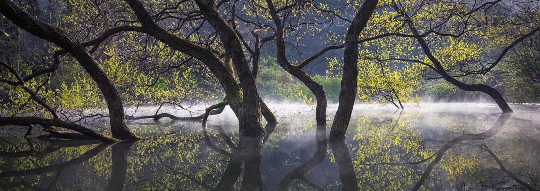 Весенняя зелень, Серянджи, Южная Корея, © Натаниэль Мерц, Корея, Победитель среди любителей 2018 года, Конкурс панорамной фотографии EPSON Pano Awards