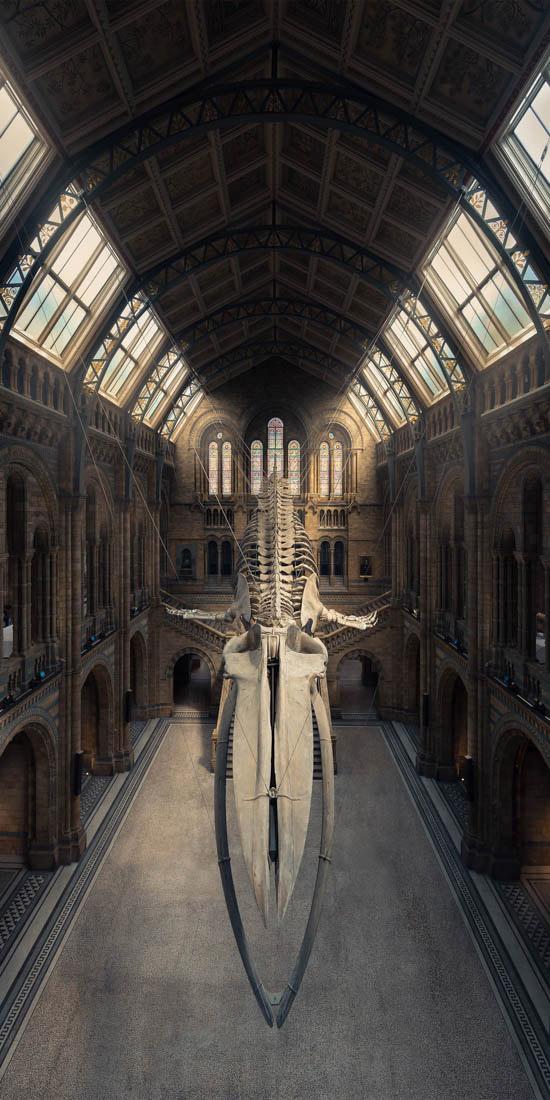 Голубой кит, Музей естествознания, Лондон, Великобритания, © Питер Ли, Великобритания, Победитель любительской премии - Искусственная среда / Архитектура, Конкурс панорамной фотографии EPSON Pano Awards