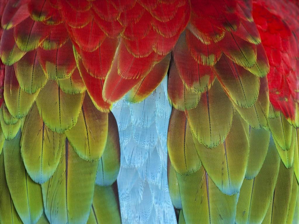 Перья попугая, © Джон Эллис, Победители прошедшего фотоконкурса «Узоры» от Photographic Angle