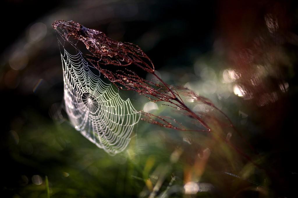 Всемирная сеть, © Евгений Сколоков, Победители прошедшего фотоконкурса «Узоры» от Photographic Angle