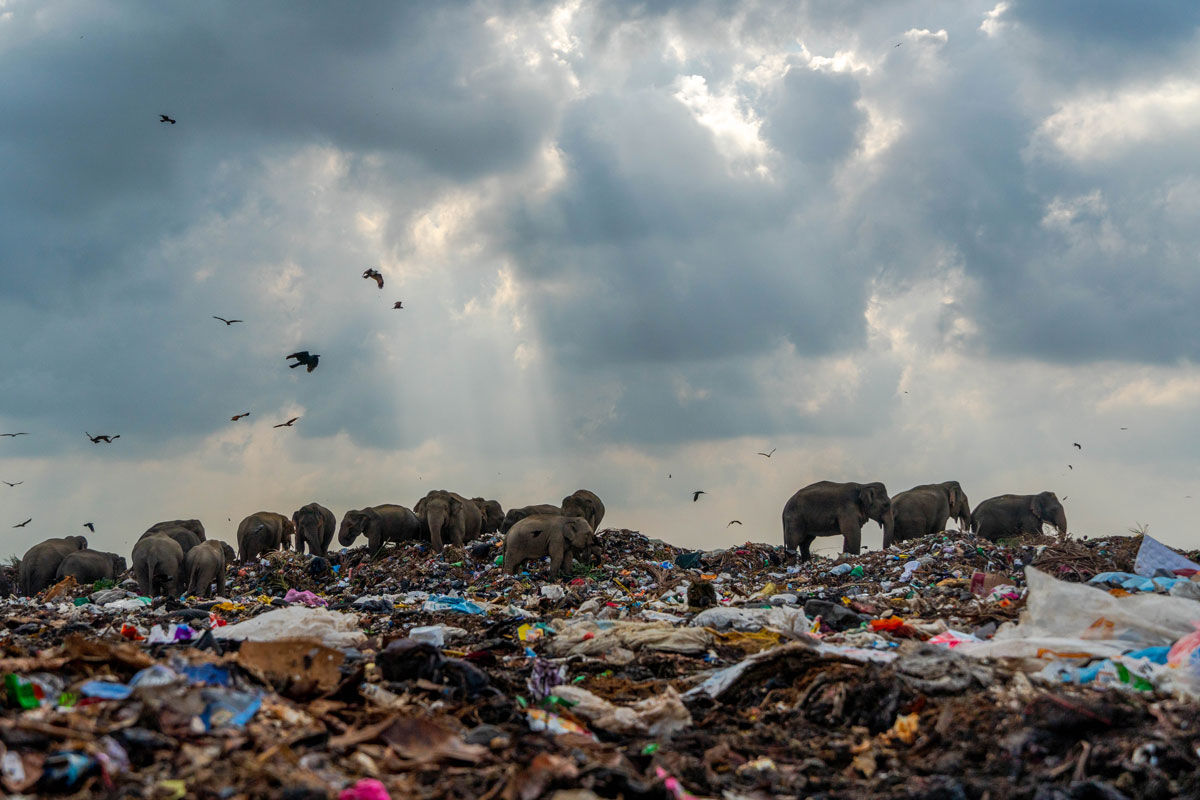 Опасные слоны-мусорщики от Тилаксана Тармапалана