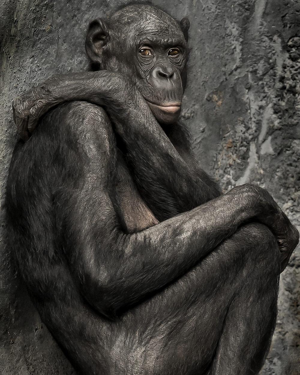 Я не такой, как ты!, © Стив Леймберг, Амелия-Айленд, Флорида, США, Финалист категории «Любитель: Портреты животных», Конкурс портретной фотографии «Лица»