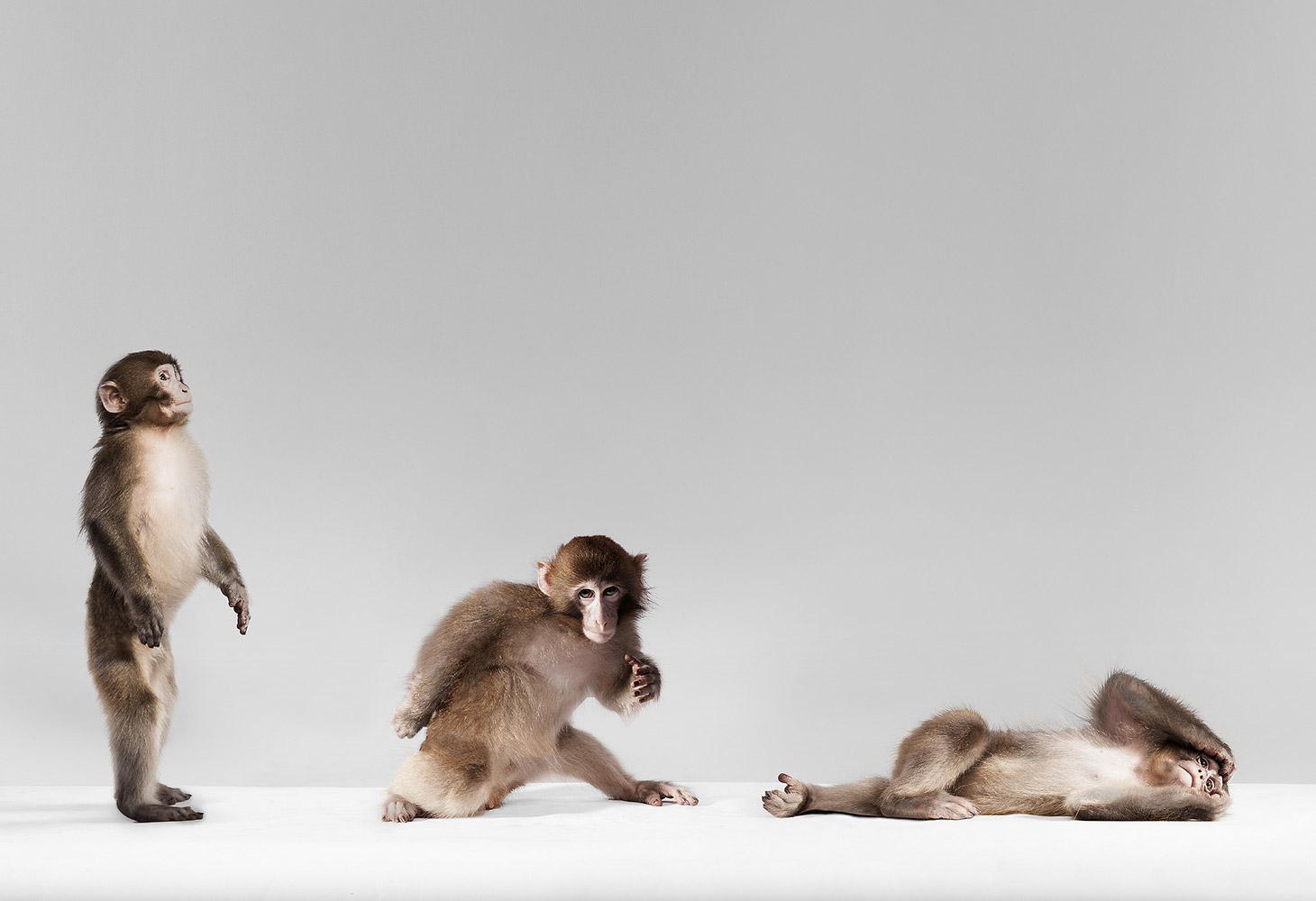 Обезьяна в движении, © HollenderX2, Бруклин, Первое место в категории «Профессионал: Портреты животных», Конкурс портретной фотографии «Лица»