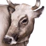 Фармвилл, портреты потерянных (почти) животных, © Эмануэла Коломбо, Сумираго, Варезе, Италия, Профессионал: Портреты животных, Конкурс портретной фотографии «Лица»