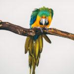 Привязанный | Портретная серия птиц в неволе, © Оливер Регейро / Oliver Regueiro, Победитель в категории «Природа», Фотоконкурс Photography Grant