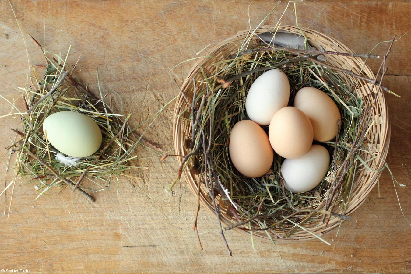 Свежие яйца, © Стефан Деду, Румыния, 1-е место, категория «Юный фотограф, 11-14 лет», Фотоконкурс Pink Lady Food