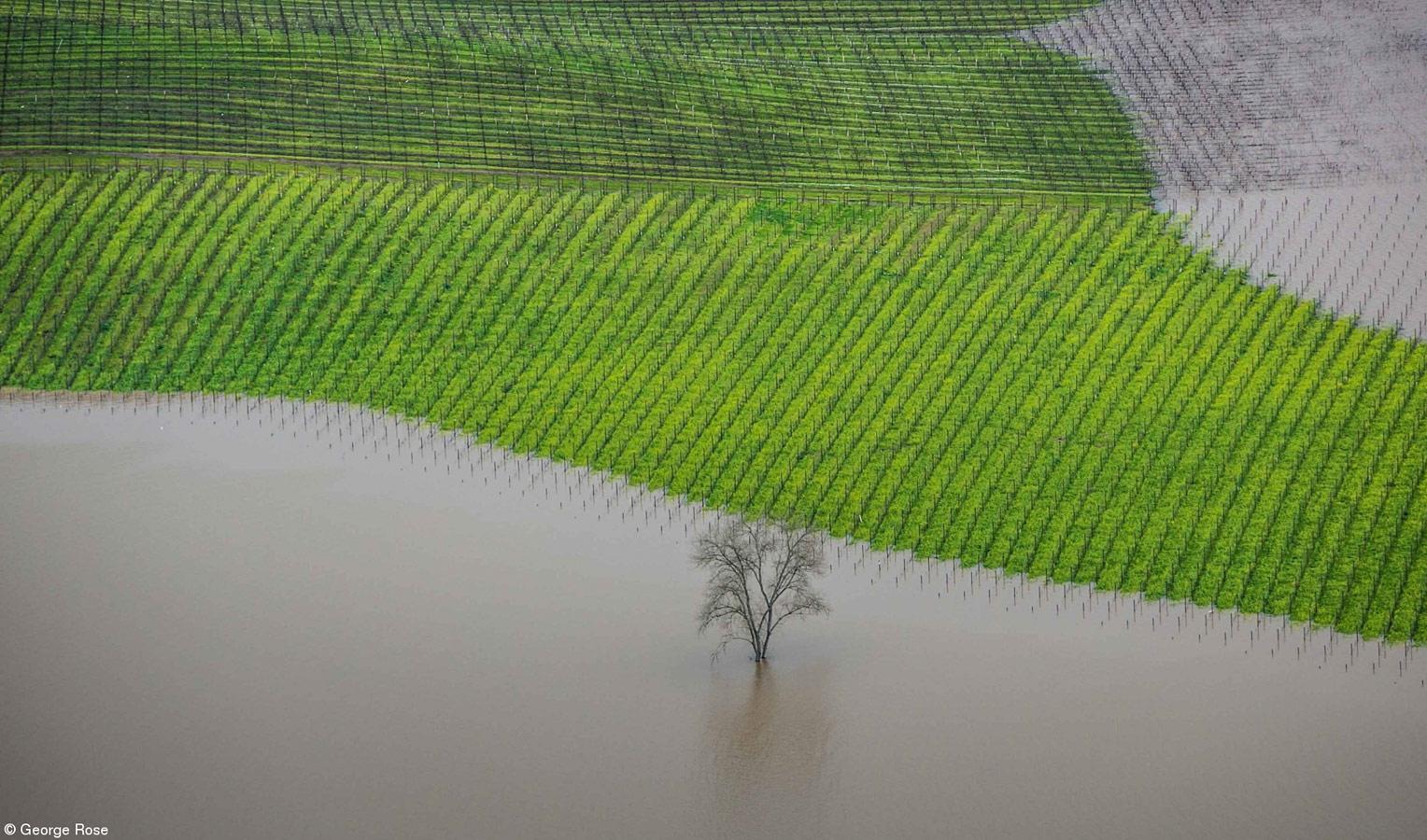 Наводнение виноградников, графство Сонома, © Джордж Роз, США, 1-е место, Errazuriz Wine Фотограф года — Места, Фотоконкурс Pink Lady Food