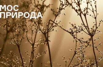 Фотоконкурс «ПРИРОДАТУТ» от Мосприроды