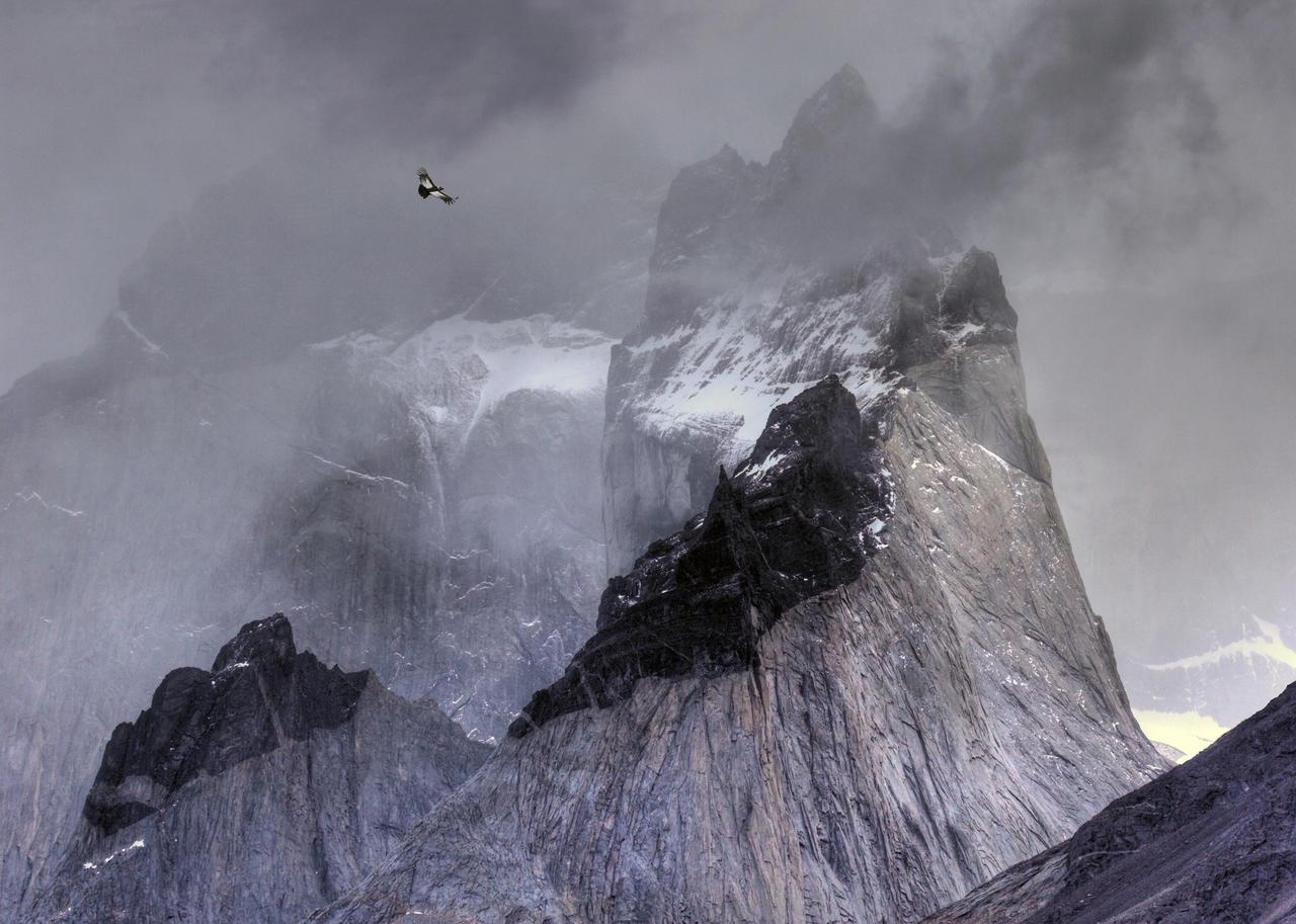 Кондор над горами, © Бен Холл, Золото, Фотоконкурс «Птичий фотограф года»